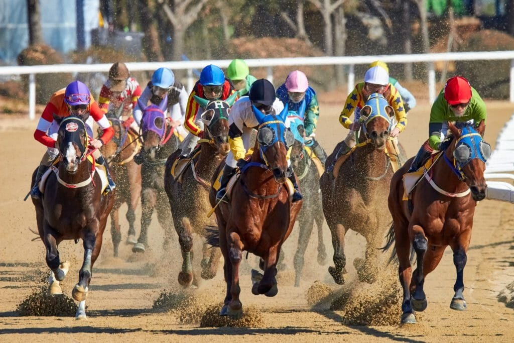 Pony Racing Authority. Jockey. Racing. Ponies.
